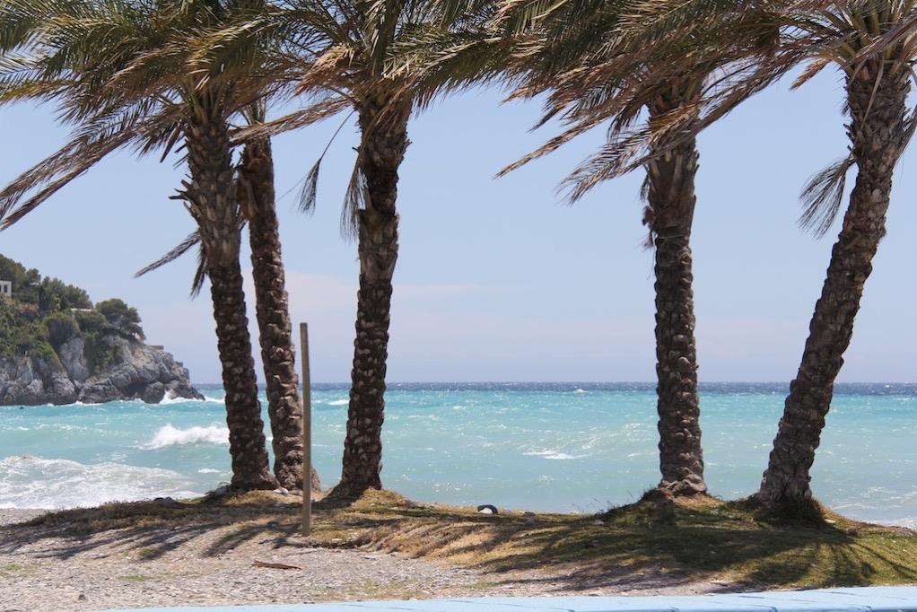 Palmen im Wind bei La Herradura