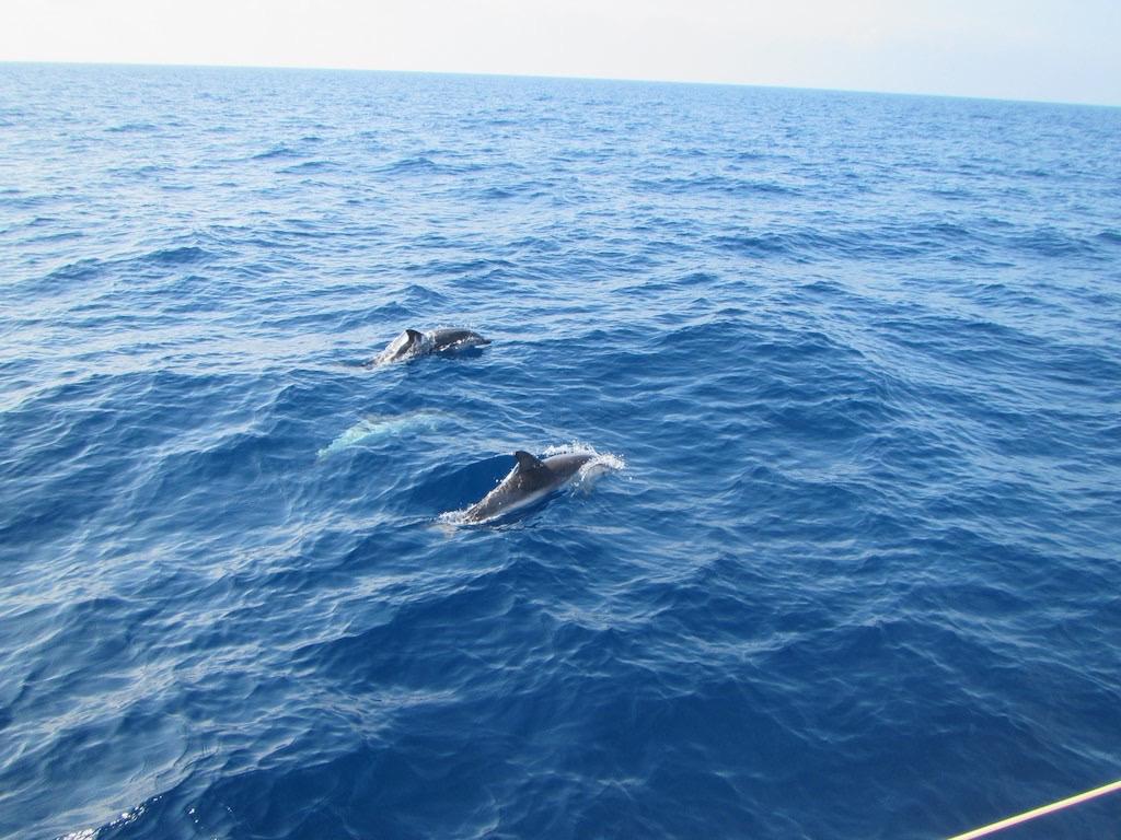 Delfinschule begleitet uns