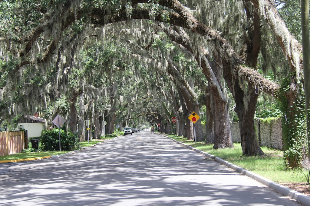 Die wunderschöne Magnolia Avenue