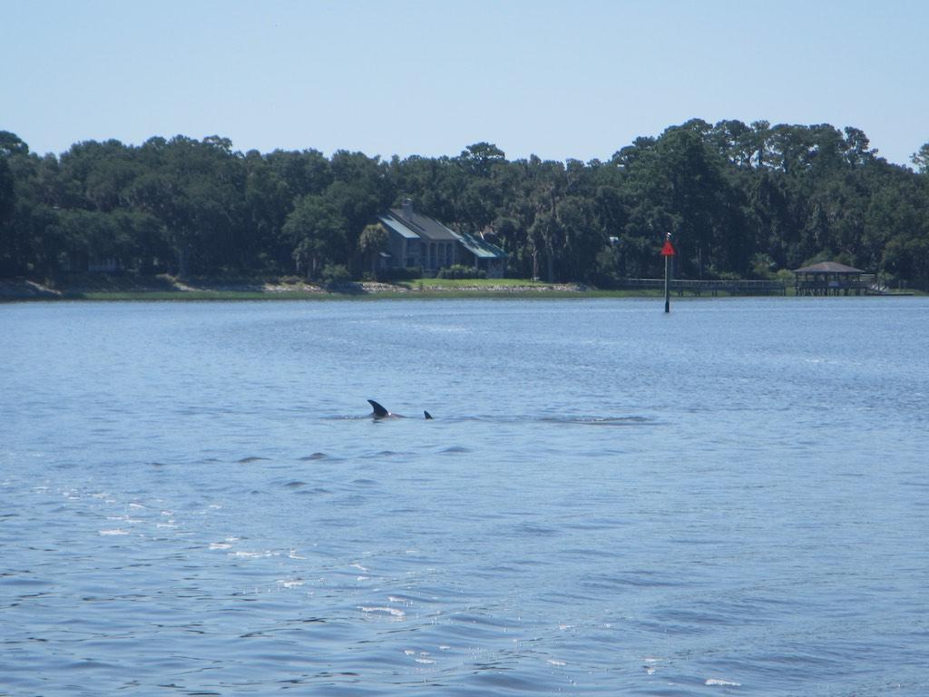 Delfine umrunden uns