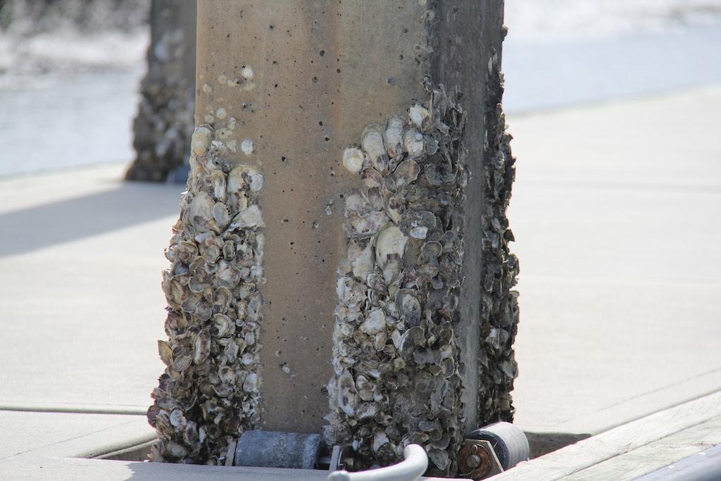 Die Muscheln am Poller