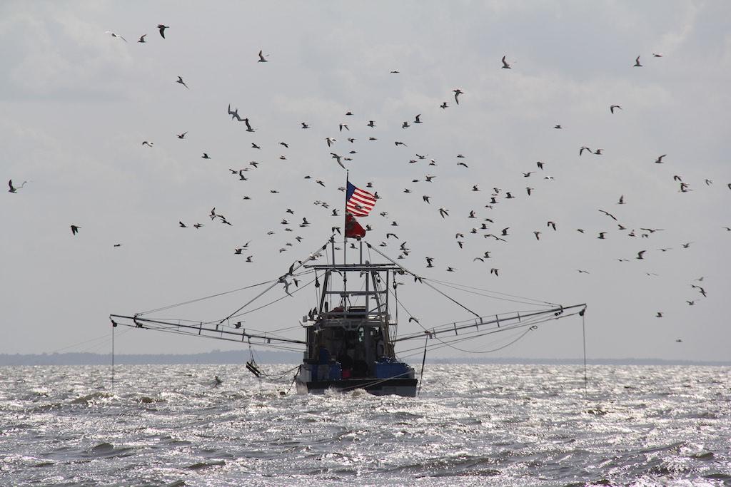 Lotse und Fischer
