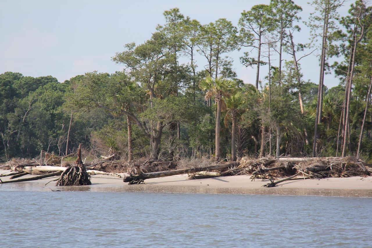Die alten Bäume am Ufer des Skull Creek